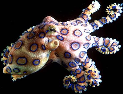 Image from: Everything Octopus