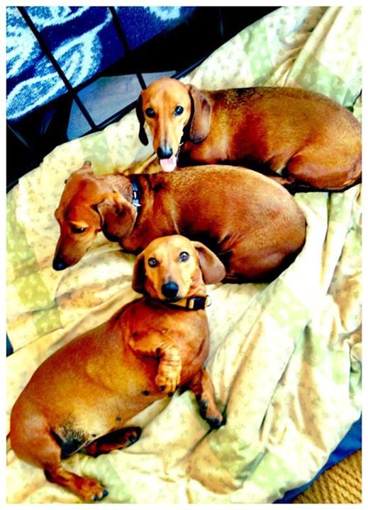 3 pups 2